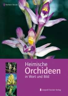 Norbert Novak: Heimische Orchideen in Wort und Bild, Buch